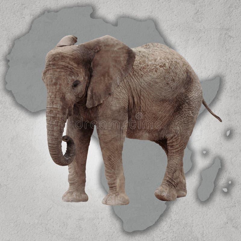Elefante e África imagem de stock