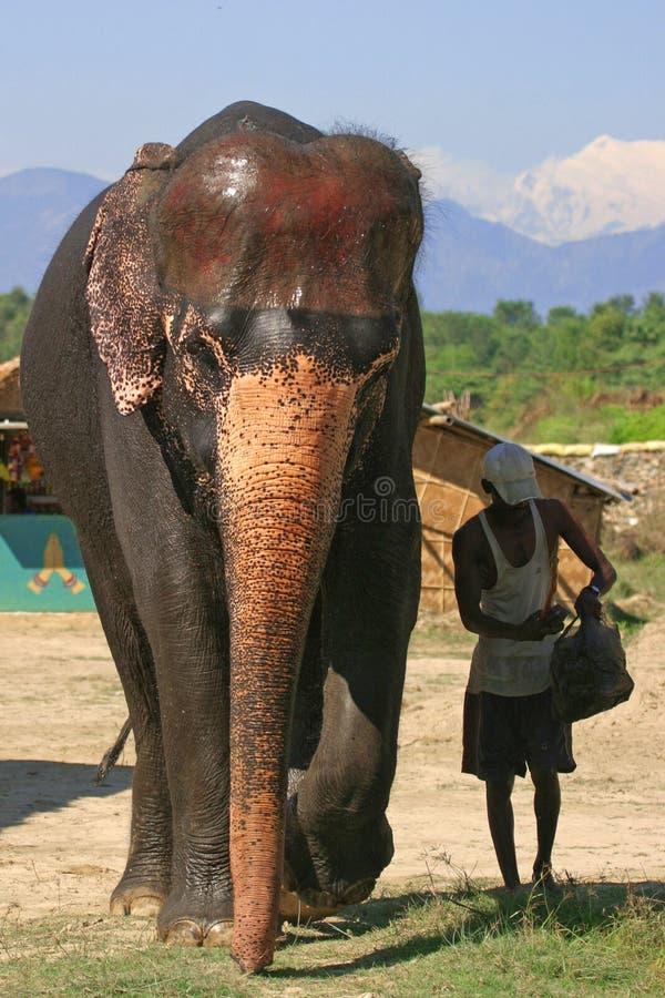 Elefante e mahout fotografia stock
