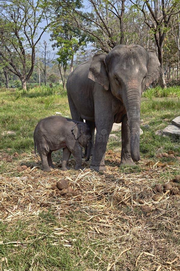 Elefante e sua criança fotografia de stock royalty free