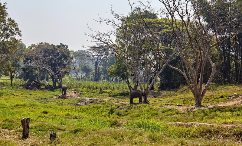 Elefante e sua criança fotos de stock royalty free