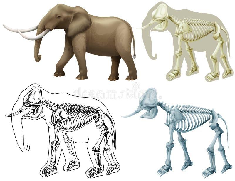 Elefante ed il suo corpo illustrazione vettoriale