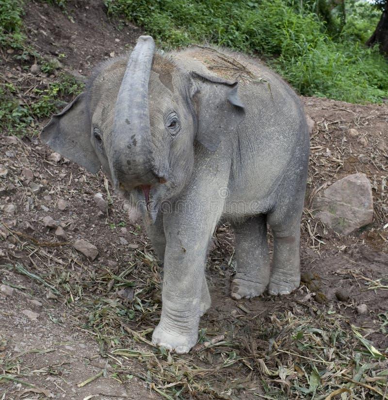 Elefante, elefante del bebé fotos de archivo libres de regalías