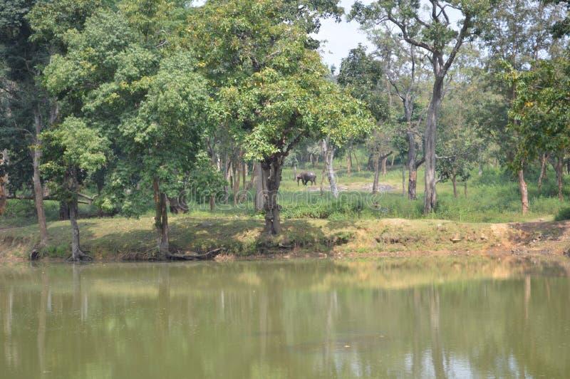 Elefante em uma floresta fotos de stock royalty free