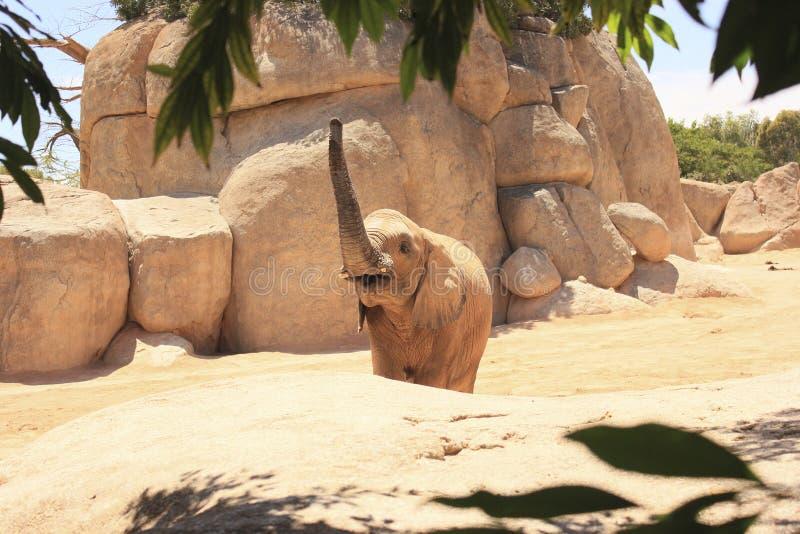 Elefante en el salvaje foto de archivo