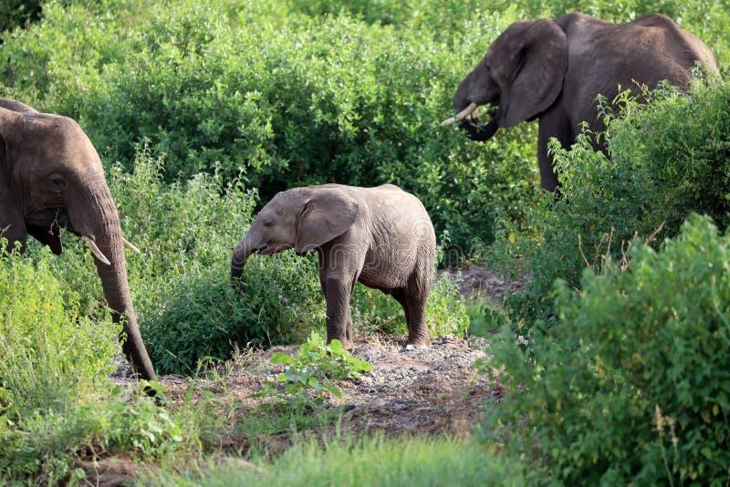Elefante en Masai Mara imagen de archivo libre de regalías
