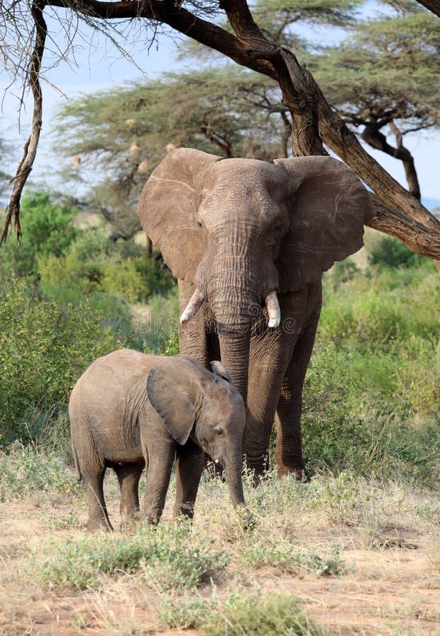 Elefante en Masai Mara imágenes de archivo libres de regalías