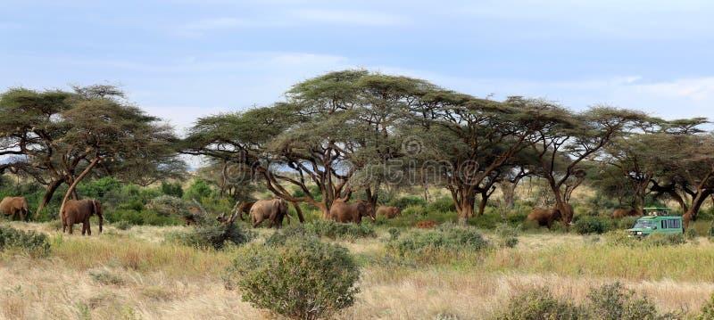 Elefante en Masai Mara foto de archivo