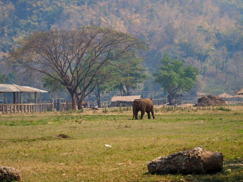 Elefante en parque de naturaleza foto de archivo libre de regalías