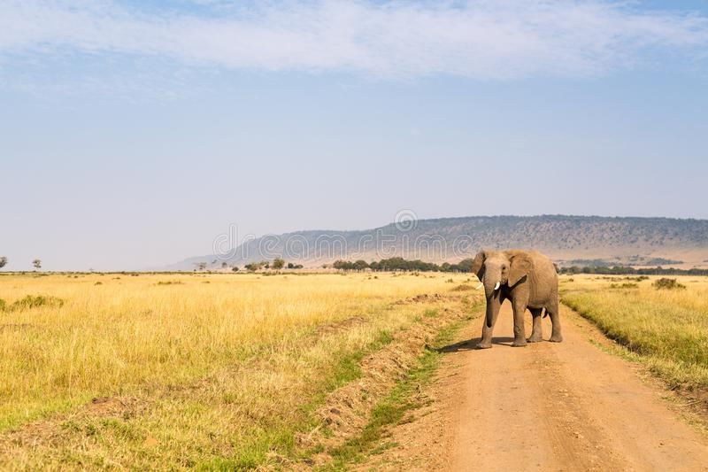 Elefante en parque del safari imágenes de archivo libres de regalías