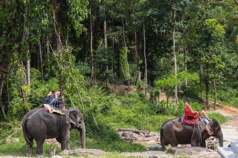Elefante en Tailandia foto de archivo libre de regalías