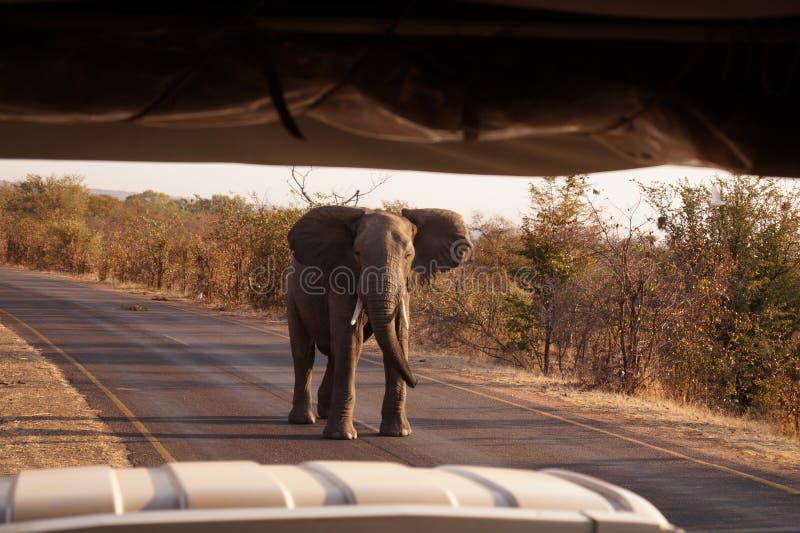 Elefante en Victoria Falls, Zimbabwe imagenes de archivo