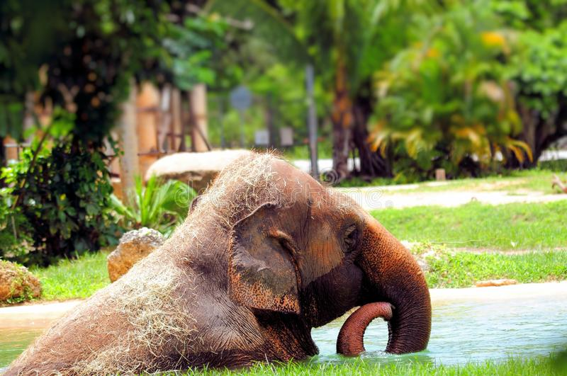 Download Elefante felice immagine stock. Immagine di elefante - 56893489