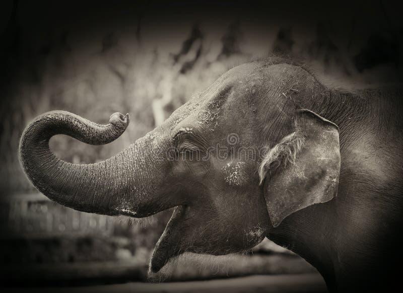 Elefante feliz imagens de stock royalty free