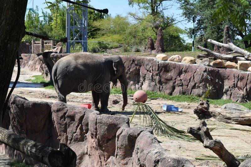Elefante feliz foto de archivo libre de regalías