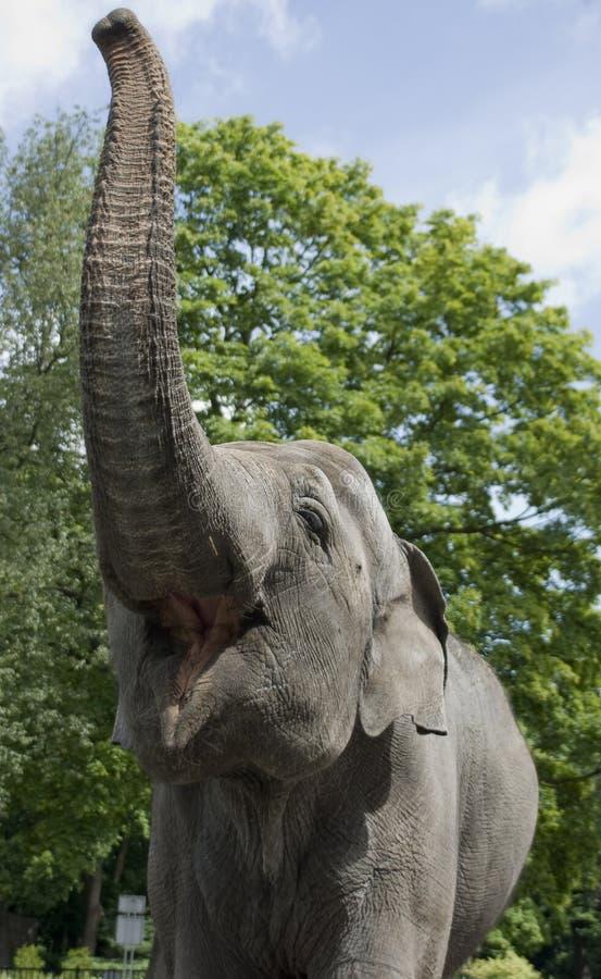 Elefante In Giardino Zoologico Fotografie Stock
