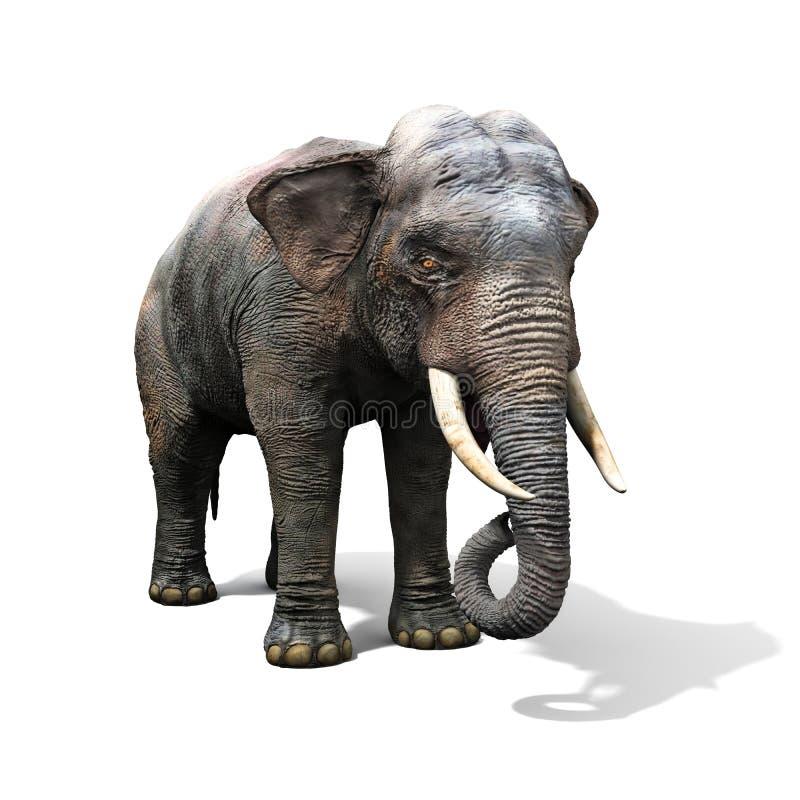 Elefante grande aislado en un fondo blanco ilustración del vector