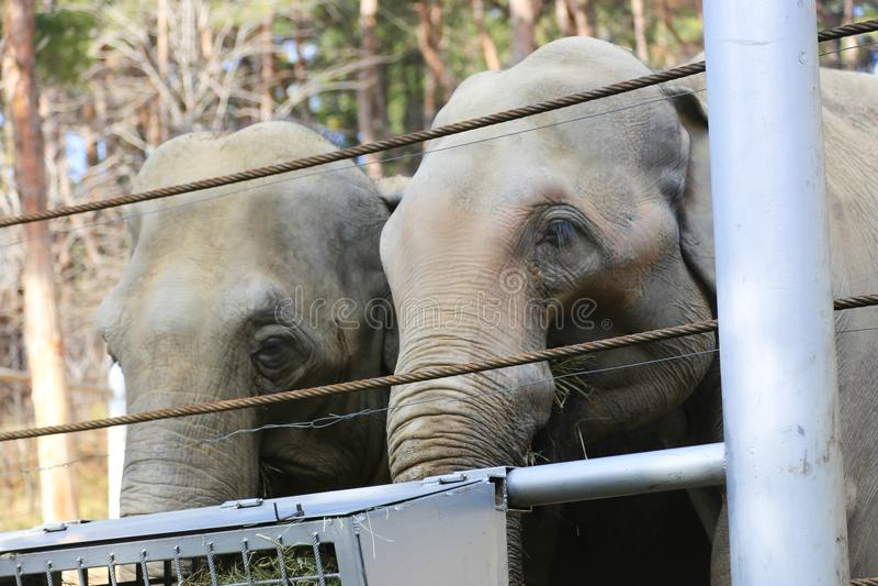 Elefante grande en parque imagenes de archivo
