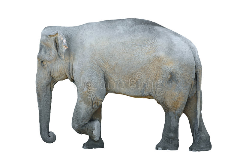 Elefante isolado ilustração royalty free