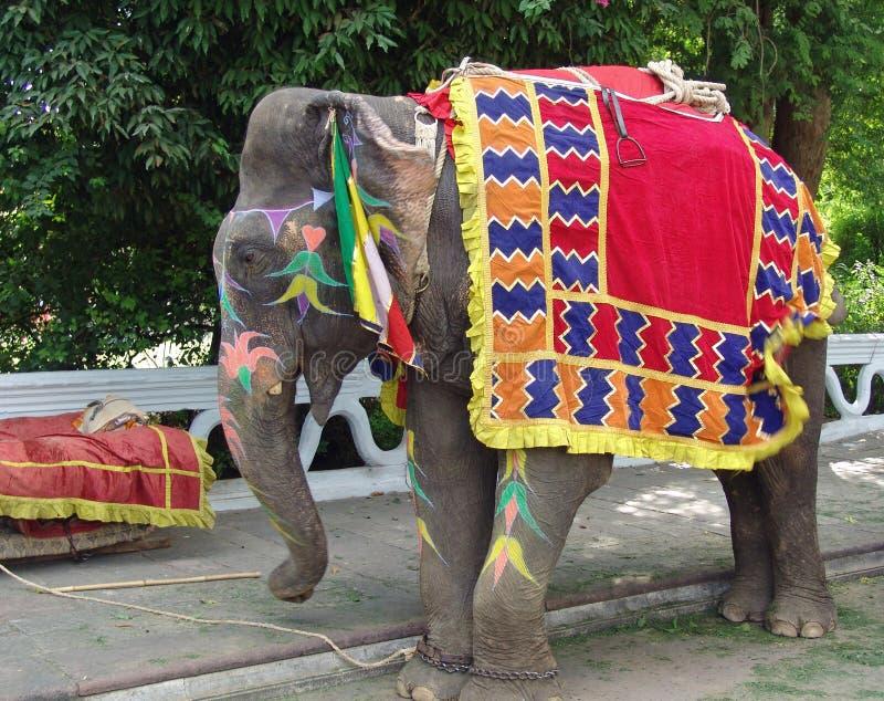 Elefante, Jaipur, India fotografia de stock
