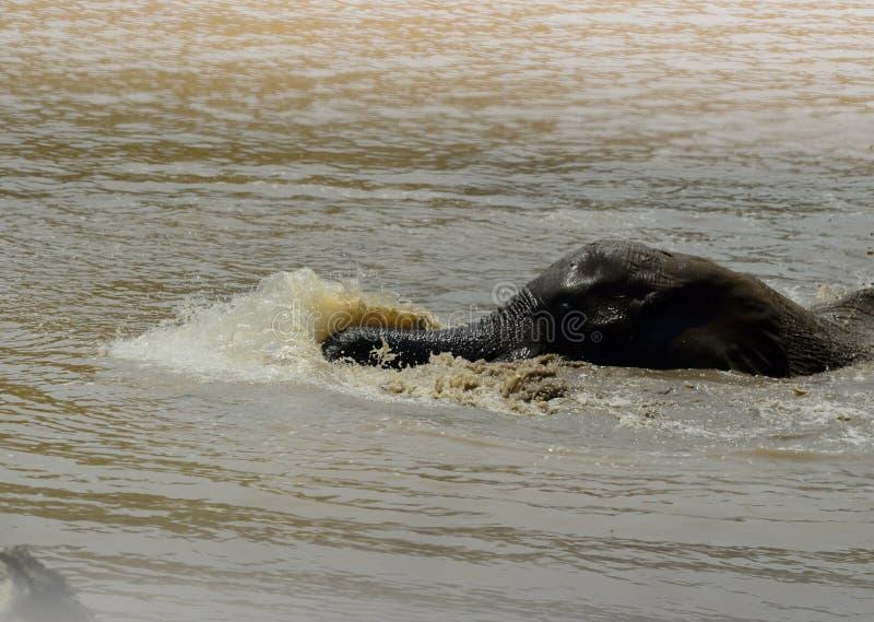 Elefante joven que nada y que goza spashing el agua, Kruger imágenes de archivo libres de regalías