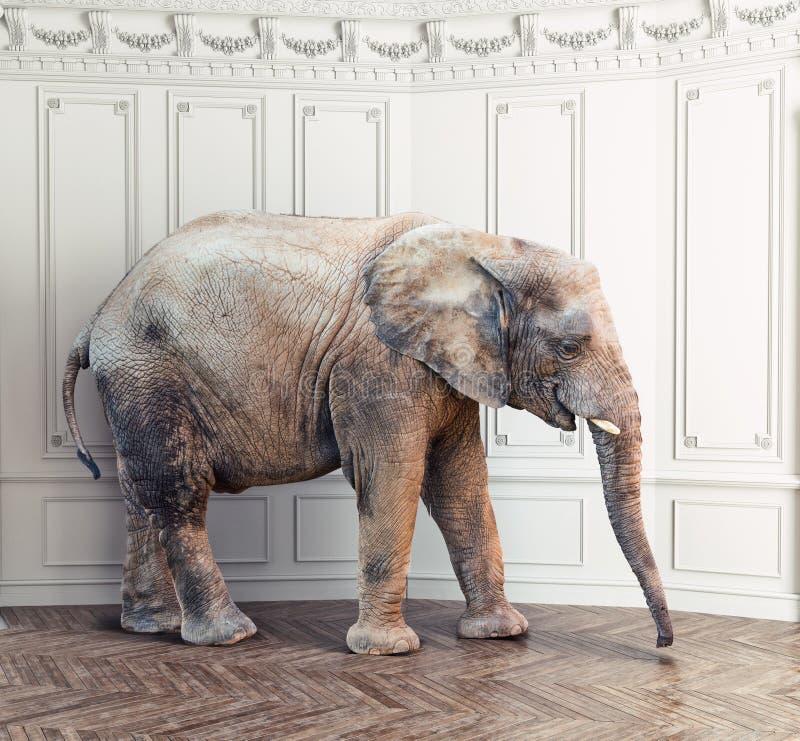 Elefante na sala ilustração do vetor