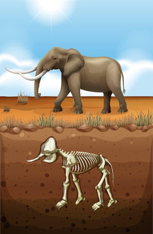Elefante na terra e no fóssil subterrâneos ilustração stock