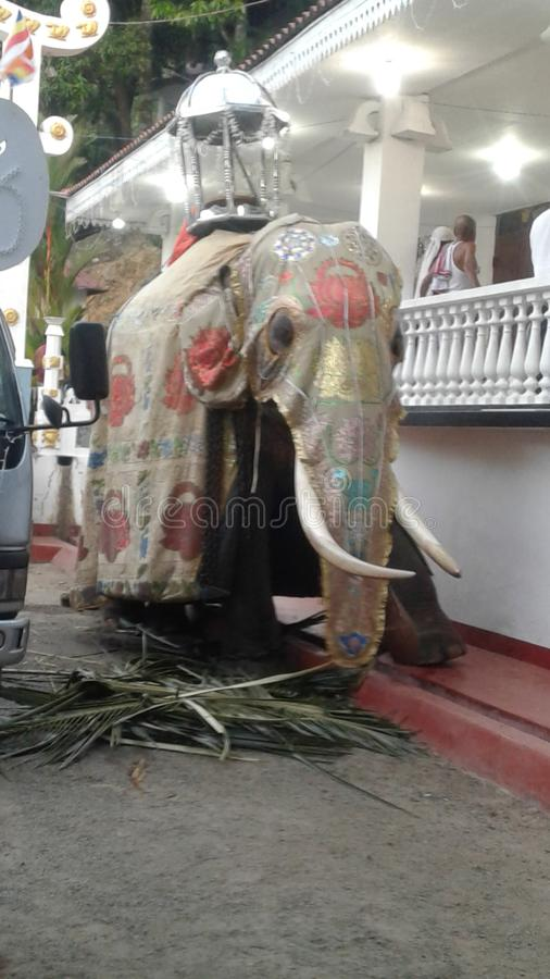 Elefante no templo do maniyangama de Sri Lanka Maniyangama imagens de stock royalty free