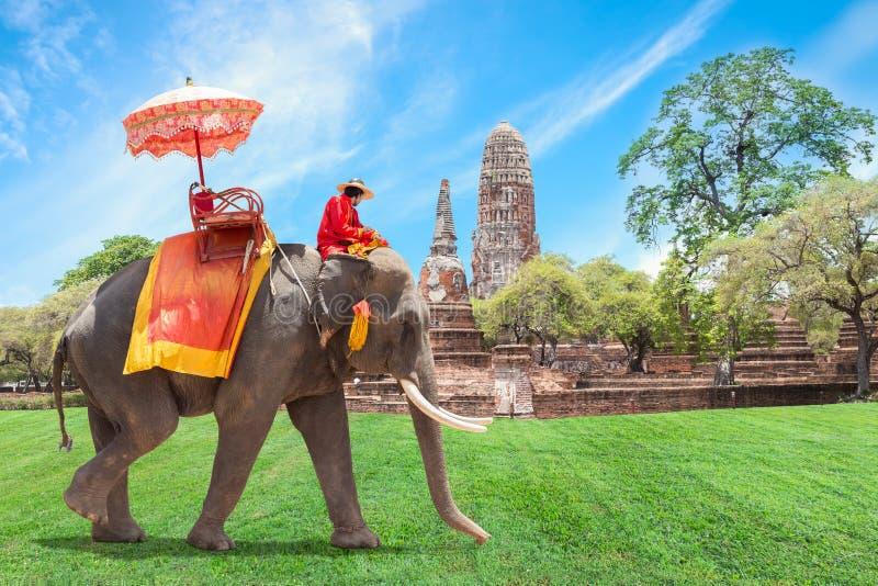 Elefante para turistas em Ayutthaya, Tailândia imagens de stock royalty free