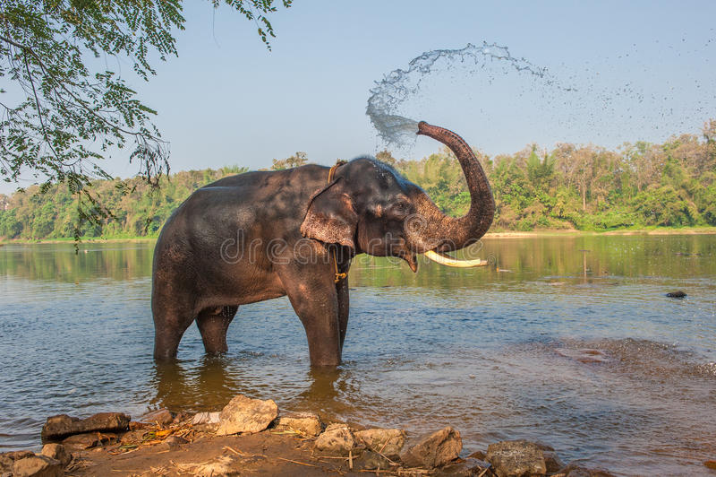 Elefante que banha-se, Kerala, Índia fotografia de stock royalty free