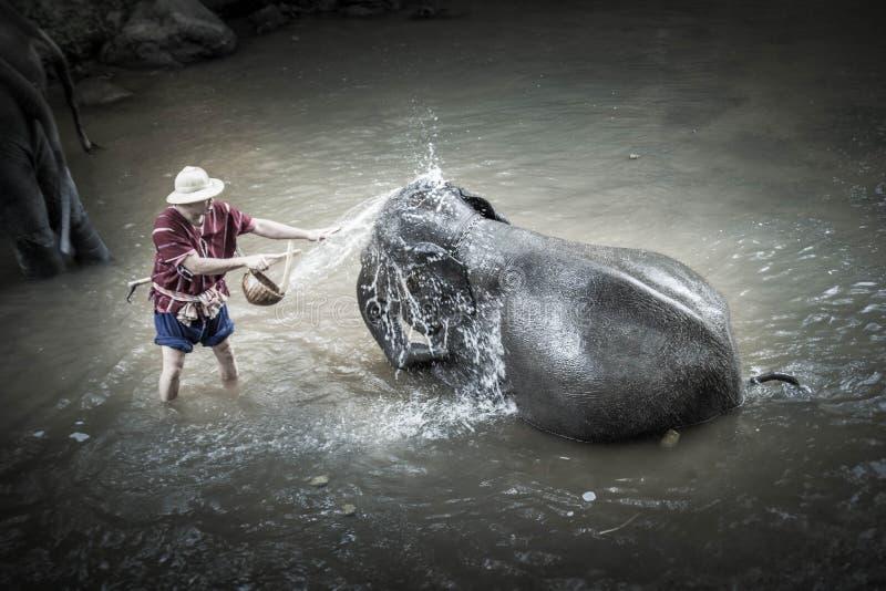 Elefante que banha-se no acampamento do elefante de Maesa fotografia de stock