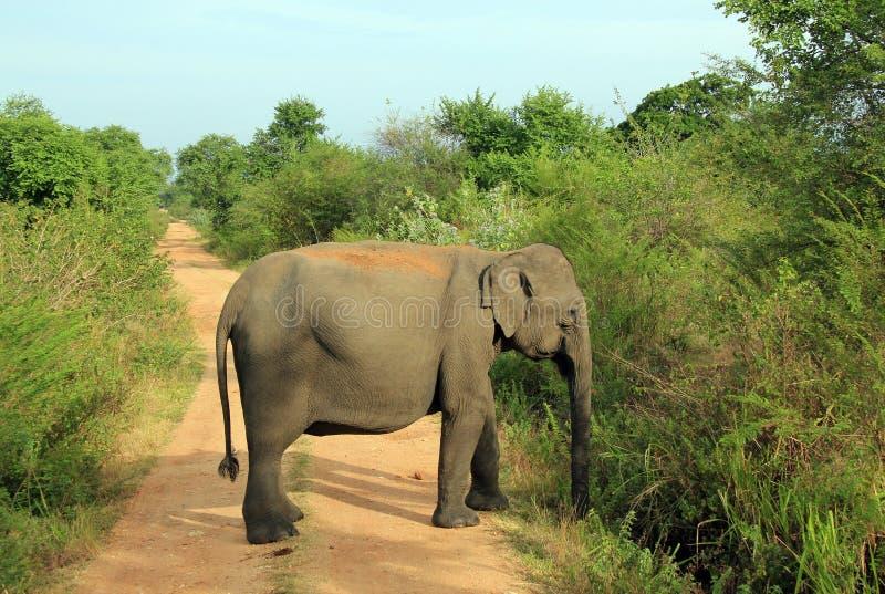 Elefante que bloquea el camino fotografía de archivo