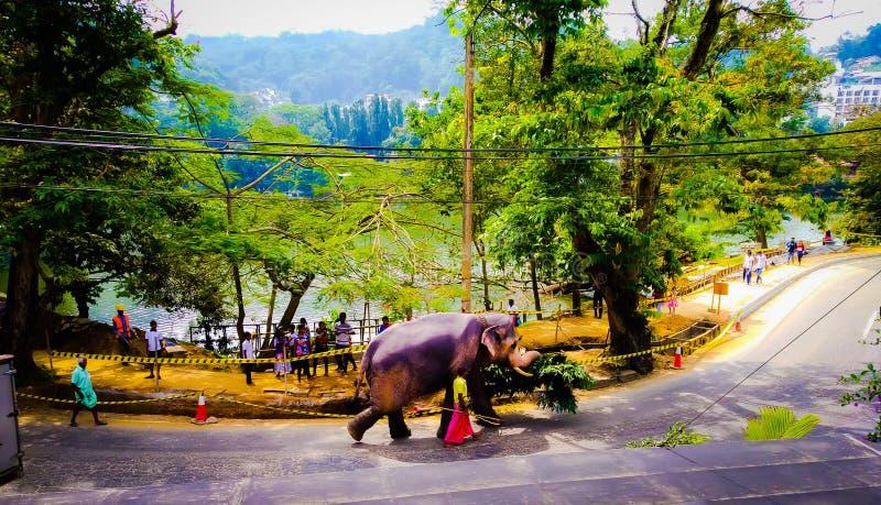 Elefante que comidas que llevan a él en una carretera principal foto de archivo