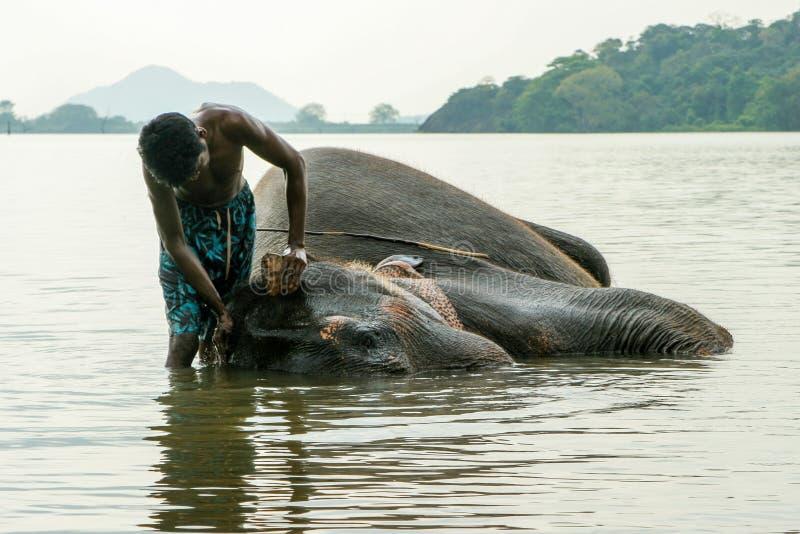Elefante que está sendo lavado fotografia de stock royalty free