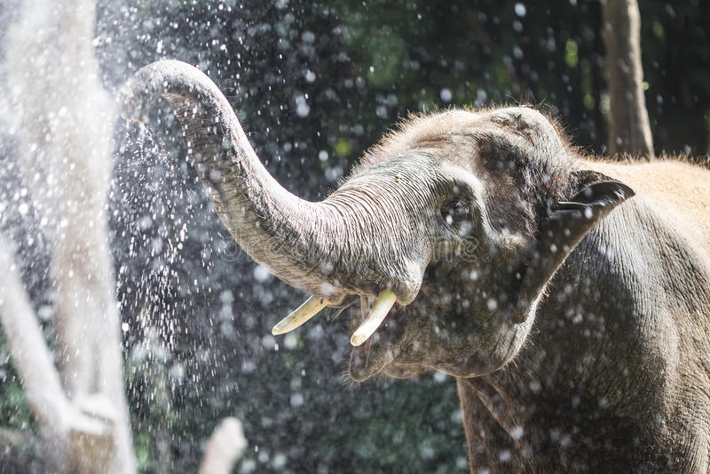 Elefante que juega con agua en parque zoológico foto de archivo
