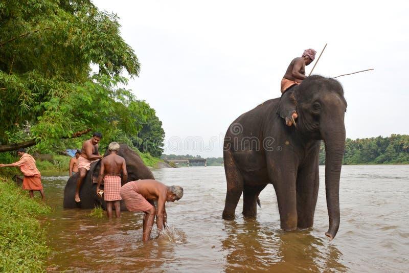 Elefante que se baña en el río fotos de archivo libres de regalías