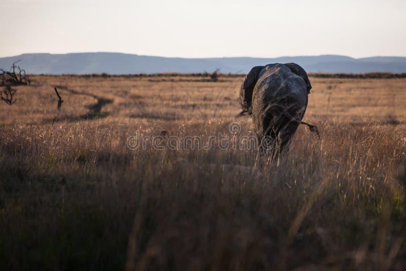 Elefante que se va fotos de archivo