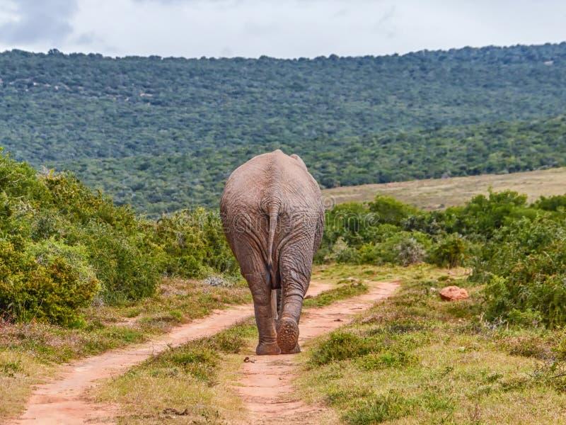 Elefante que se va fotografía de archivo