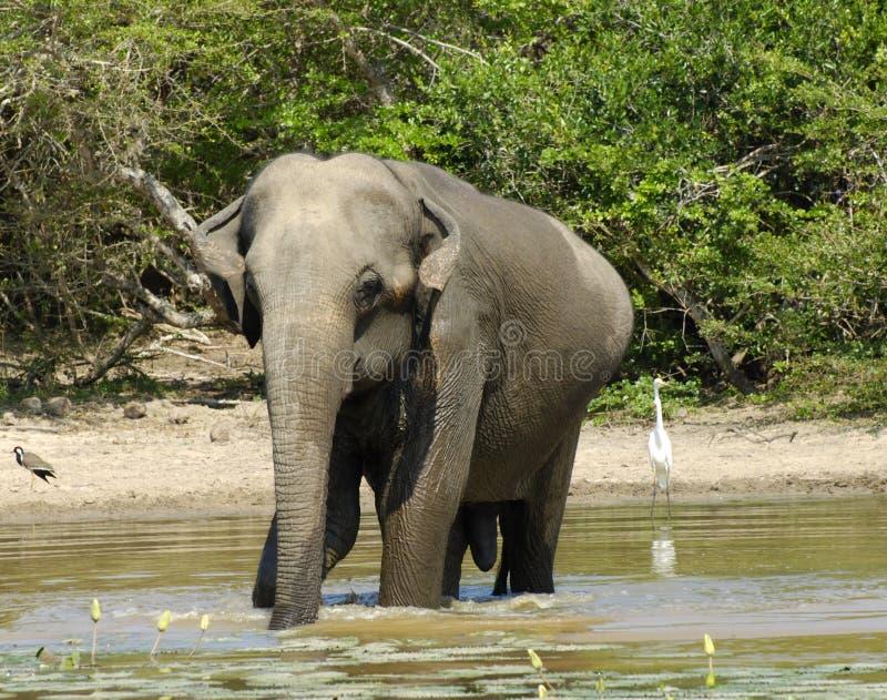 Elefante que tiene baño imagenes de archivo