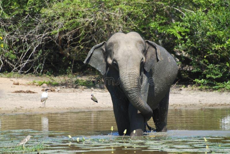 Elefante que tiene baño foto de archivo libre de regalías