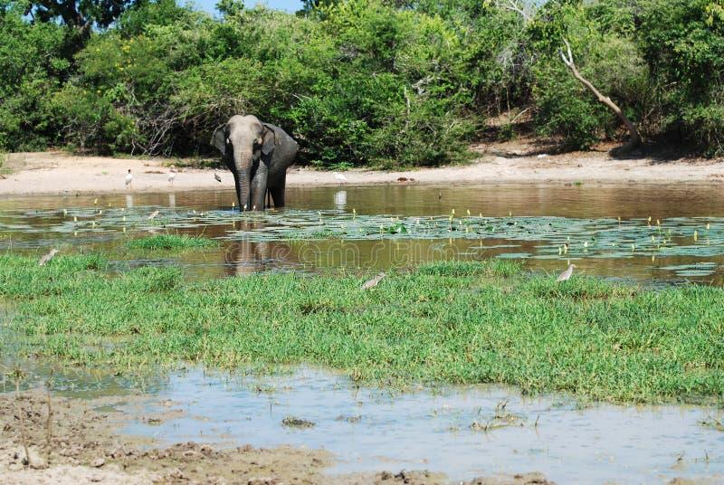 Elefante que tiene baño fotografía de archivo libre de regalías
