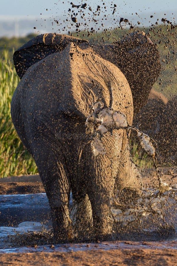 Elefante que toma un baño de fango en el waterhole fotografía de archivo