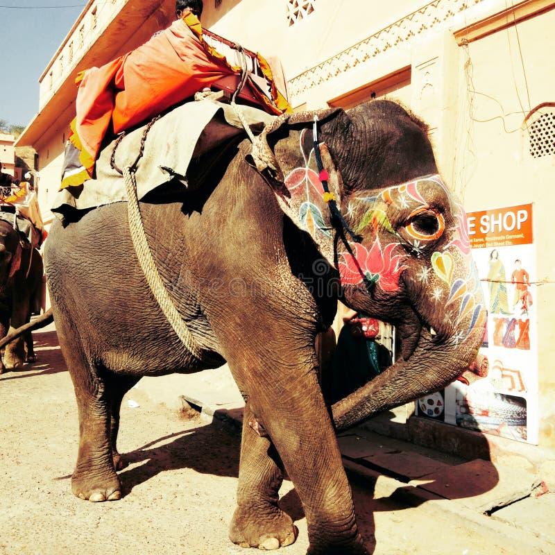 Elefante real fotografia de stock