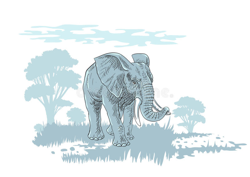 Elefante in savana fotografia stock