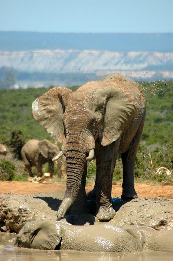 Elefante selvaggio immagine stock