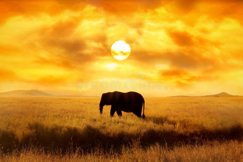 Elefante solo contra puesta del sol y sol y nubes hermosos en sabana Parque nacional de Serengeti África tanzania Imag artístico imagenes de archivo