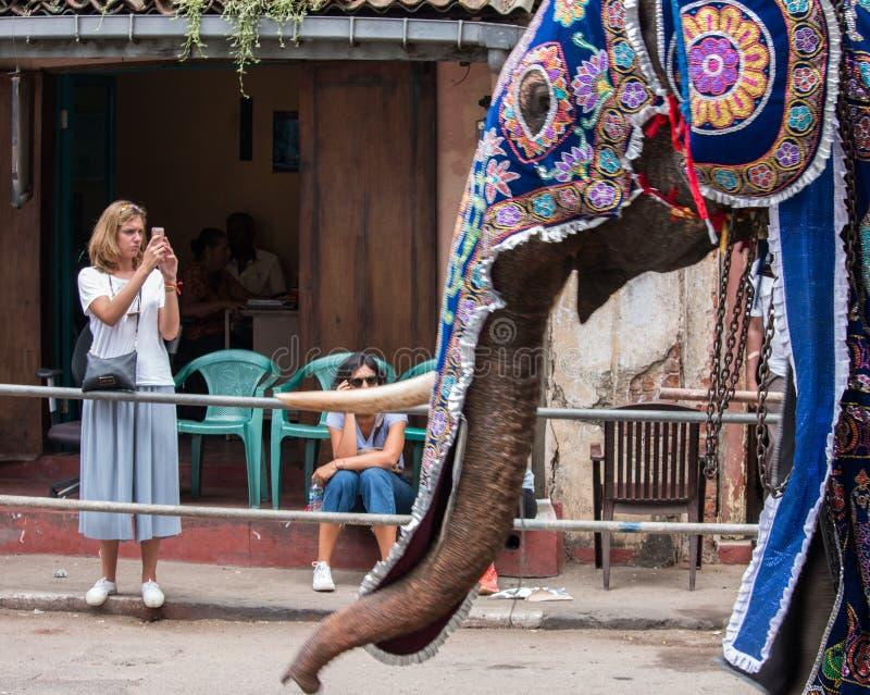 Elefante Sri Lanka fotografia de stock royalty free