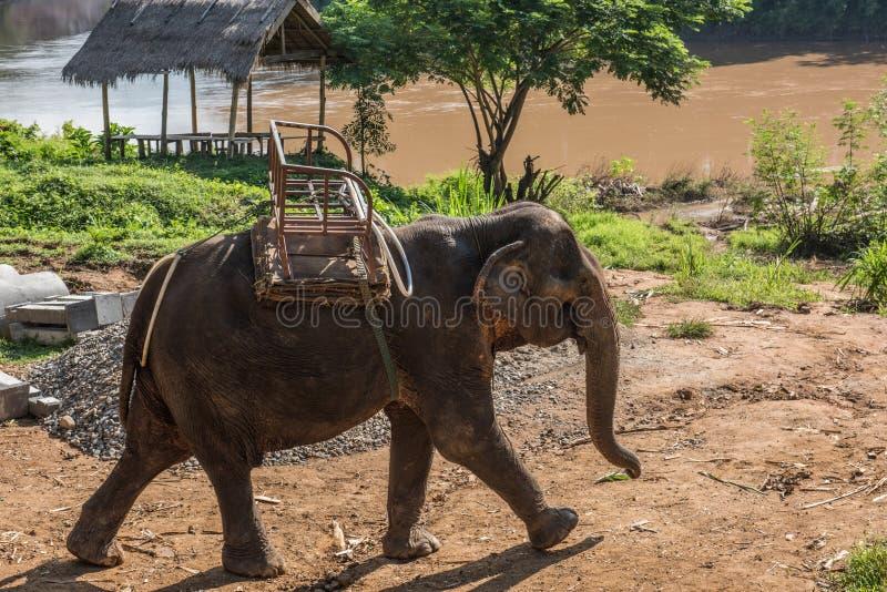Elefante su Nam Khan River Banks immagini stock