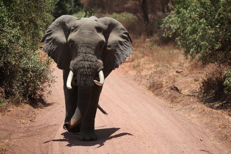 Elefante sulla strada non asfaltata immagine stock libera da diritti