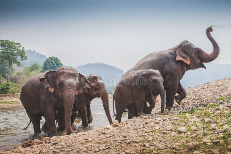 Elefante tailandés que sale del río imagenes de archivo