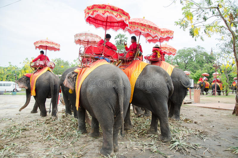 Elefante tailandês Ayutthaya imagens de stock royalty free